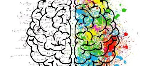 Brain zones